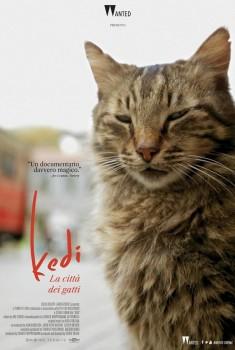 Kedi. La città dei gatti (2016) Poster